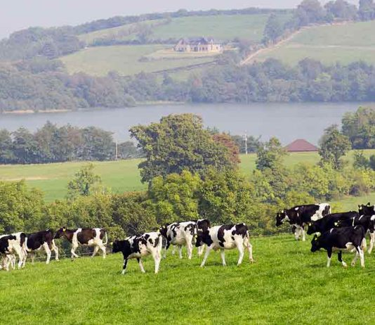 68 jobs to go at Lakeland Dairies in Monaghan