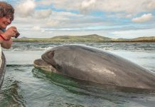 Nuala Moore and her training buddy, Fungie. Nuala is an extreme swimmer - Image Credit Nuala Moore